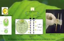 Micro Photosynthetic Power Cells may be the Green Energy Source for the Next Generation