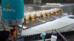 eFishery fish farm feeder dispenses feed based on fish hunger levels