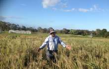 Wheat disease-resistance gene identified, potential to save billions
