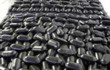 Coalgae: Coal dust and algae can help meet future energy needs