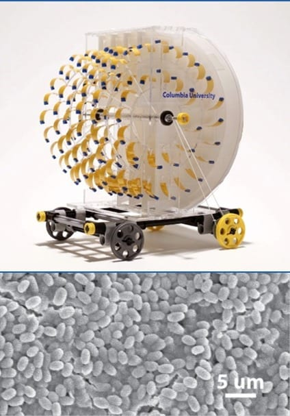 """Rotary engine (top) harnesses energy from evaporation to drive a miniature car. Electron microscope image (bottom) shows the evaporation-powered """"artificial muscle"""" made from bacterial spores on a polymer component."""