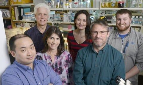 Members of the UT Southwestern team whose research successfully halted progression of a form of muscular dystrophy in mice included (l-r) Dr. Chengzu Long, Dr. Eric Olson, Dr. Rhonda Bassel-Duby, Dr. Leonela Amoasii, John Shelton, and Alex Mireault.