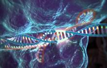High-fidelity CRISPR-Cas9 nucleases have no detectable off-target mutations