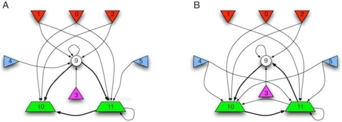Two evolved HMG networks. The shapes represent the 9 Markov variables (bits) at time that are active in the network (bits 6, 7, and 8 are connected to the network, but are not functional at generation 49,000 and not rendered here). The central feed-forward circuit for navigation is rendered in bold arrows. Color codes and numbering as in Fig. 2. A: The network evolved in our focus experiment that achieved 88% of possible fitness. B: Another network that evolved in an independent run, and that implements a variant of the hierarchical temporary memory algorithm that creates an expectation of future sensory signals. In contrast to the controller that evolved in panel (A), this one uses a feed-back strategy between memory and motors. This controller achieves 74% of maximal fitness within a random maze environment.