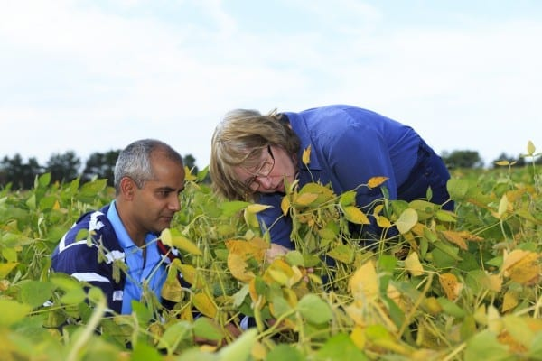 Photo by Emily Weber Doctoral student Arjun Kafle and professor Heike Bücking of the South Dakota State University Department of Biology and Microbiology examine soybeans to explore the complex interactions between plants and beneficial microorganisms that improve the nutrient uptake and stress resistance of crops.