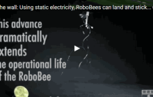 Using static electricity, RoboBees can land and stick to surfaces