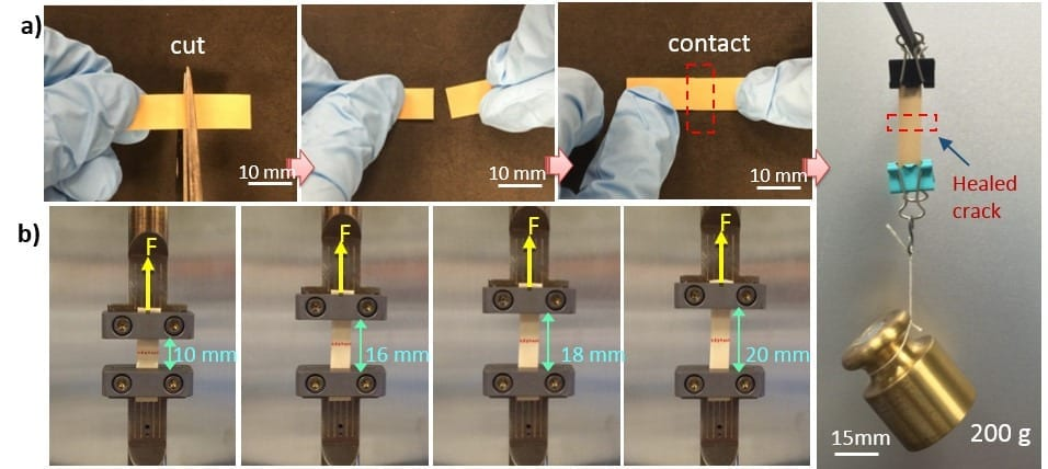 Researchers have developed a flexible electronic material that self-heals to restore many functions, even after multiple breaks. Here, the material is shown being cut in half. The healed material is still able to be stretched and hold weight. Image: Qing Wang / Penn State