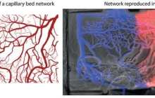 Lasers carve the path to overcome major limitations to tissue engineering