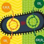 Eating Air, Making Fuel: Converting CO2 to sugars