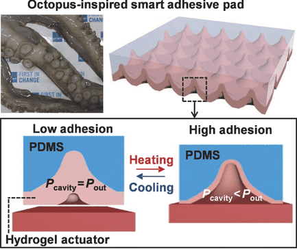 Schematic representation of microcavity arrays within a octopus-inspired smart adhesive pad.