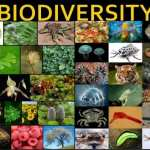 Biodiversity falls below 'safe levels' globally