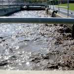 Sewage sludge could make great sustainable fertilizer