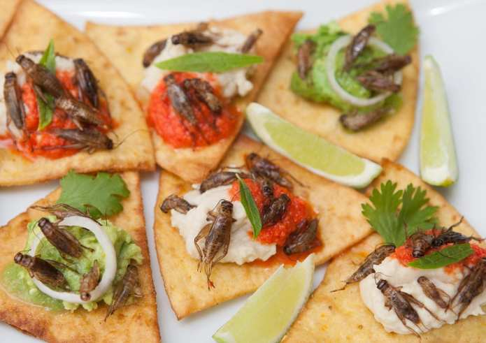 Deep fried corn tortillas with garlic fried house crickets, white bean mash with smoked garlic, rocoto salsa, epazote, and avocado, salsa verde, onion and cilantro. Photo: Jenny Svennås-Gillner