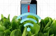 Nanobionic spinach plants can detect explosives and send an alert