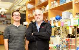 New semisynthetic life created: Scientists create first stable semisynthetic organism
