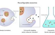 Exosomes - tiny biological nanoparticles - offer significant potential in detecting and treating disease