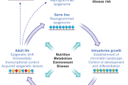 Discovery: The mechanism behind calorie restriction and lengthened lifespan
