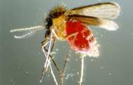 A vaccine for Leishmania, the second deadliest parasite, gets much closer