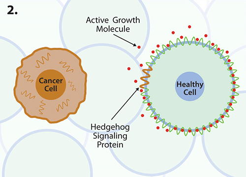 A new way to block cancer cell growth?