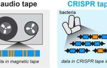 Microbes are the basis for the world's smallest tape recorder