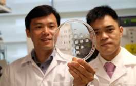 A way to turn energy-storing fats into energy-burning fats with a new patch