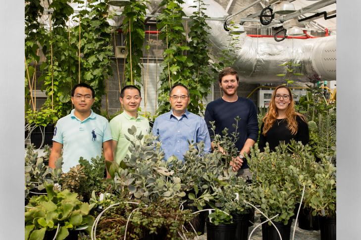 Drought-resistant plant genes could play a significant role in bioengineering