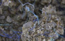 What effects are microplastics having on dry land?