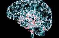 Transplanting a special type of neuron into the brain restores cognitive functions in Alzheimer's models