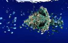 Microplastics levels in Northwest Atlantic fish are one of the highest frequencies of microplastics among fish species globally