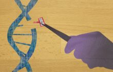 Transforming the CRISPR gene editor into a highly precision tool