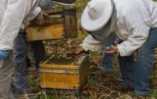 A powerful new medicine in fighting honeybee viruses: Fungus