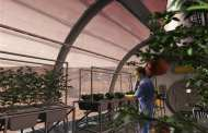 The plant hormone strigolactone could make space farming possible