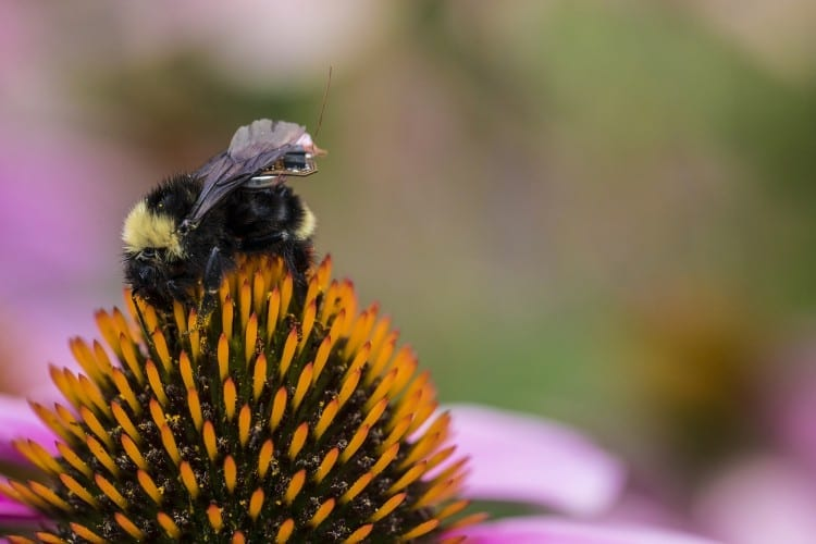 A sensor package small enough to ride on the backs of bees has great possibilities