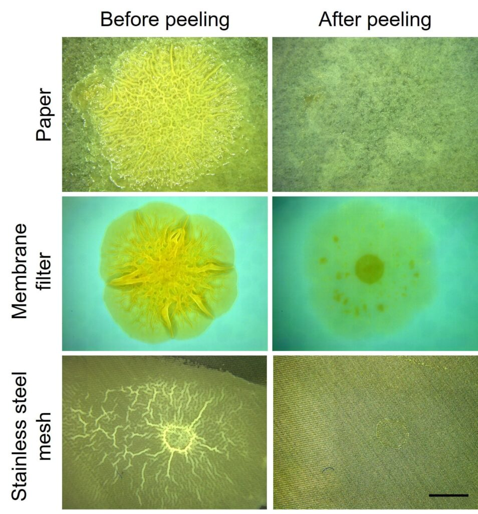 A way to cleanly and completely peel off biofilms - Innovation Toronto