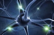 Nerve regeneration gets gene therapy help