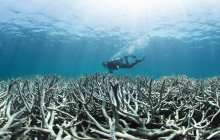 Ocean acidification could have serious consequences for millions of people globally
