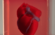 Researchers have printed the world's first 3D vascularised engineered heart using a patient's own cells and biological materials