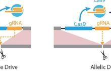 A new gene drive allows genetic editing with selective precision and broad implications