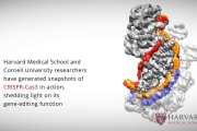 CRISPR-Cas3: A new type of gene editing CRISPR system is a major advance
