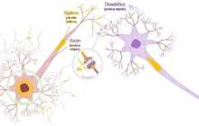 New spintronics devices behave like neurons and synapses in the human brain