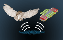 Nature, not humans, can inform new neurobiological architectures for our semiconductor devices
