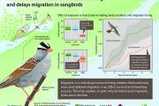 The world's most widely used insecticides could be partly responsible for a dramatic decline in songbird populations