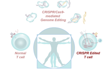 The success of gene editing and cell function offers new hope to cancer patients