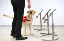 Could dogs be trained to sniff out Covid-19?