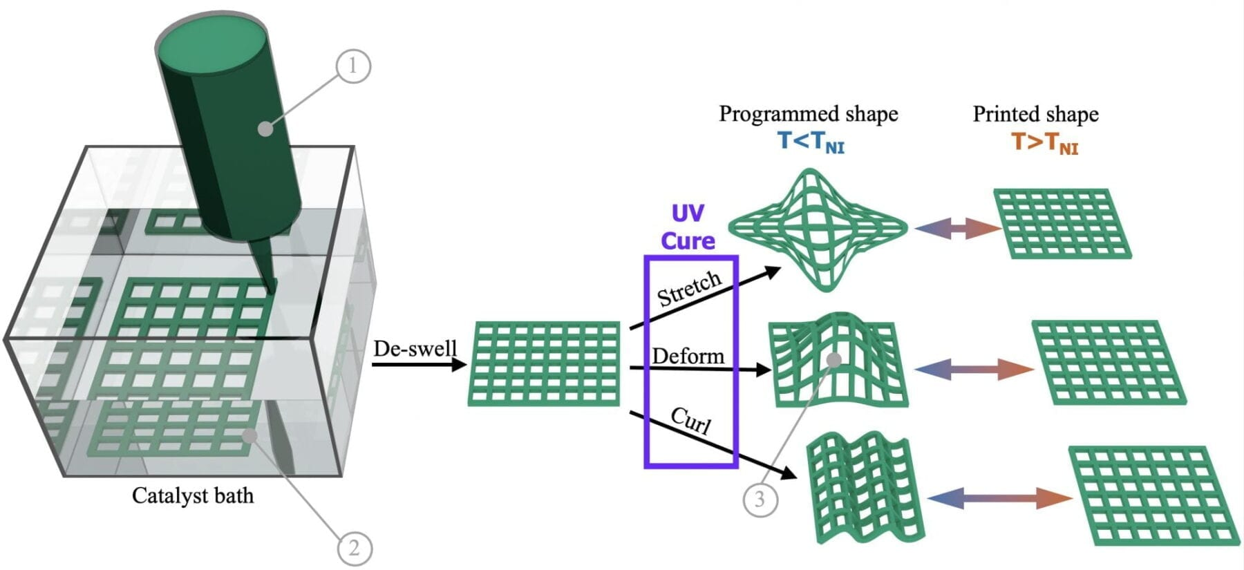 A graphic shows the process by which a Rice University lab uses 3D printing to make shapeshifting materials that may be useful to make soft robots or as biomedical implants. Courtesy of the Verduzco Laboratory