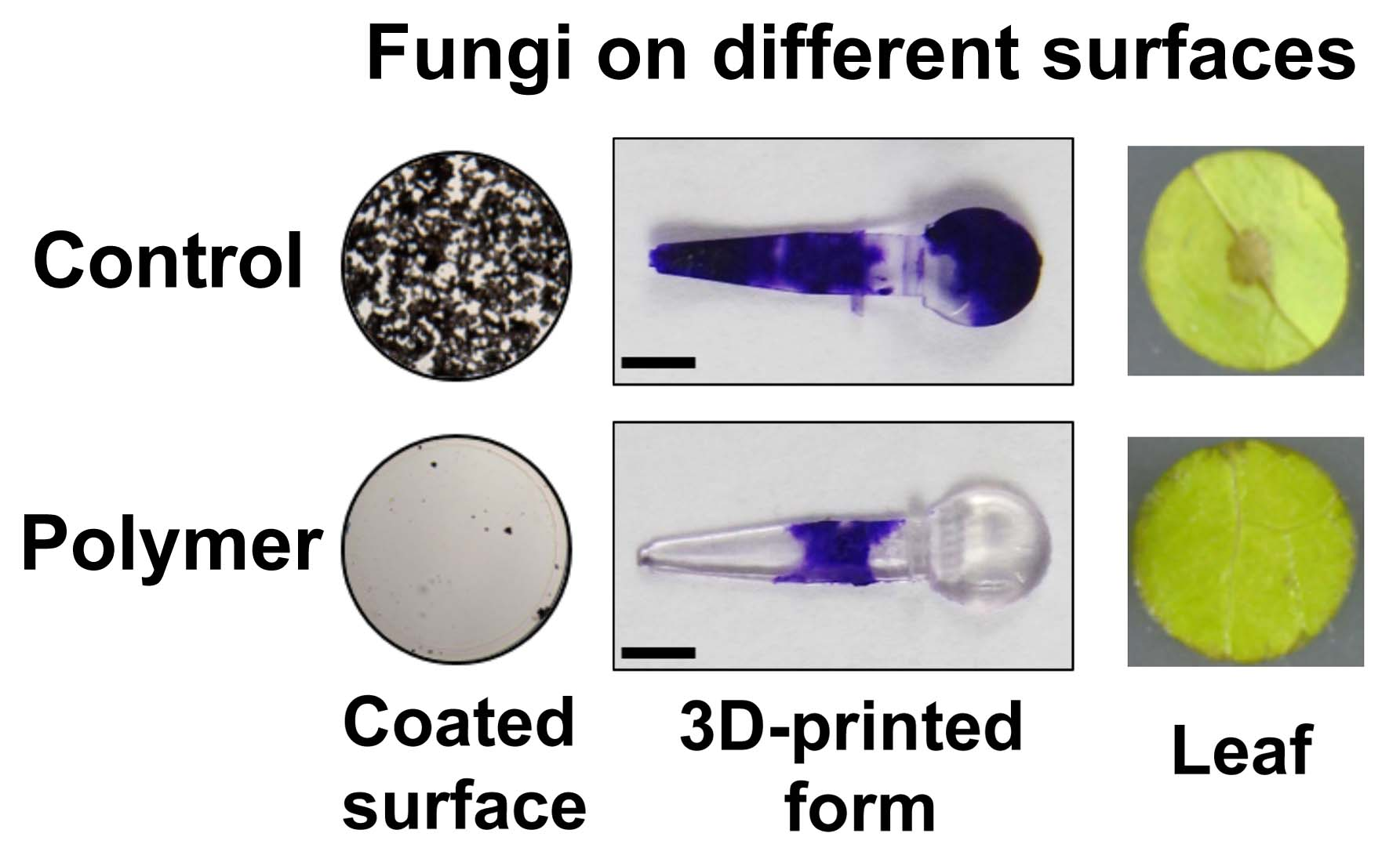 Fungi on different surfaces