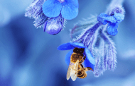 A 94 per cent loss of plant-pollinator networks over the last 30 years