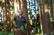 A portable DNA device could change tree pest control