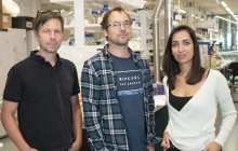 A new method for fast, cheap, yet accurate testing for COVID-19