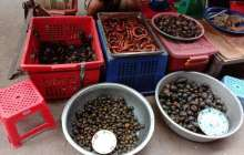COVID-19 puts a real focus on the risks of wildlife trade